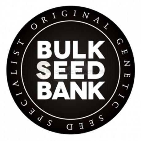 BULKSEEDBANK, Auto Big Bud, 10 ks, Autoflowering