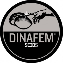 Dinafem Power Kush 3ks, feminizovaná