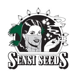 Sensi Seeds Silver Pearl 10ks / stand.