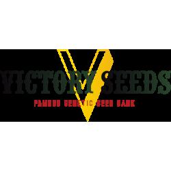 Victory Seeds, Auto Big Bud, 10 ks, Feminized