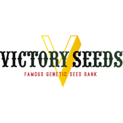 Victory Seeds, Great White Shark, 5 ks, Feminized