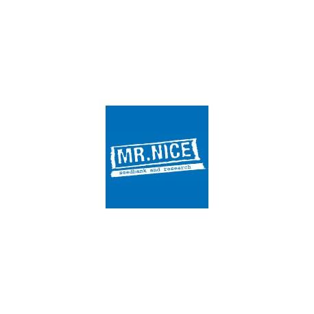 Mr. Nice Seeds The Doors 18ks (NL5Hz x Haze AC)