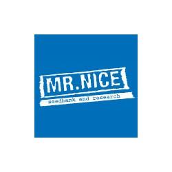 Mr. Nice Seeds The Stones 18ks (Master Kush Skunk x Haze AC)
