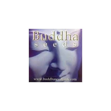 Buddha Seeds Magnum 5ks / fem. autoflowering