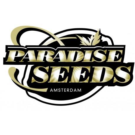 Paradise Seeds Allkush 10ks, stand.