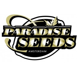 Paradise Seeds Allkush 5ks, stand.