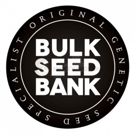 BULKSEEDBANK, Big Bud, 10 ks, Feminized