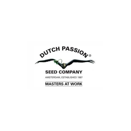 Dutch Passion AutoMazar - feminizovaná 3ks, autoflowering