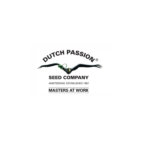 Dutch Passion AutoUltimate 3ks, fem. a autoflowering