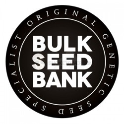 BULKSEEDBANK, Black Domina, 10 ks, Feminized