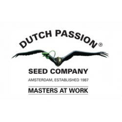 Dutch Passion CBD SkunkHaze 10ks, feminizovaná