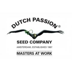 Dutch Passion StarRyder 3ks - feminizovaná a autoflowering