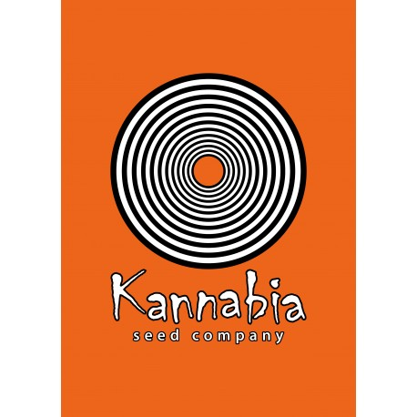 Kannabia -Karamelo 10ks, Feminizovaná