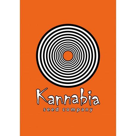 Kannabia -Original Berry 10ks, Feminizovaná