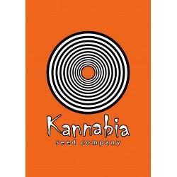 Kannabia -Original Berry 5ks, Feminizovaná