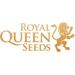 Royal Queen Seeds Blue Cheese Automatic 3ks, fem. autoflowering