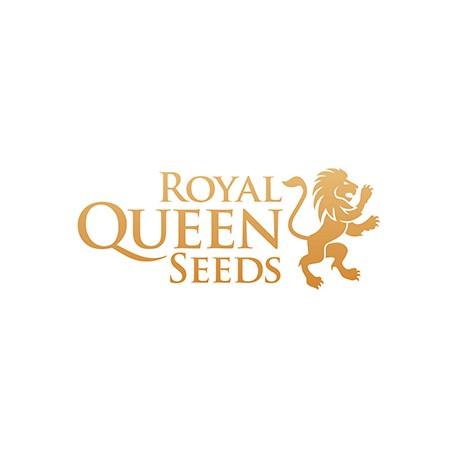 Royal Queen Seeds Chocolate Haze 10ks, fem.