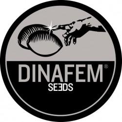 Dinafem Critical Kush 10ks, fem.